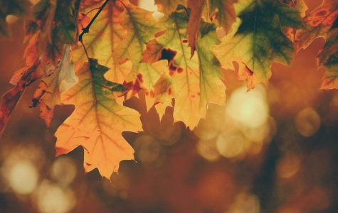 What's So Great About November