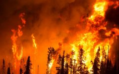 Why Are Wildfires Happening So Often?